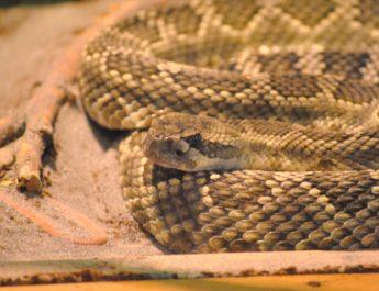 Premieră europeană la Galați: toate speciile de șerpi veninoși din lume, adunate într-un singur loc