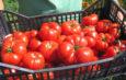 Program agricol de maxim interes pentru gălățeni, reluat și în 2020