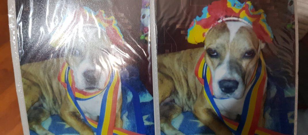 Câine ucis cu cruzime