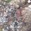 Rețetă de 5 stele Michelin într-un sat din Brăila. Un țăran a mâncat o gâscă rară, protejată de lege