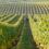 Un aparat din industria viticolă ar putea fi folosit pentru depistarea coronavirusului